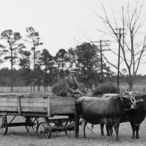 Dr. Charles Dearing on ox-drawn wagon