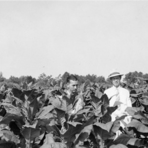 Ross Vaughn and County agent Hallawell looking at Vaughn's demonstration on the Scouth Carolina system of growing tobacco, Nashville, North Carolina, June 1942