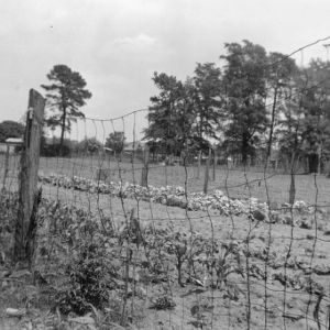 View looking through wire fence at row of cotton on farm near Red Springs, North Carolina