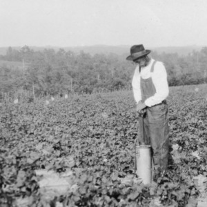 Spraying magnesium arsenate on snap peas with pumping air pressure sprayer, Mount Airy, NC, 1926