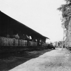 Loading potatoes in Elizabeth City, North Carolina, August 3, 1928