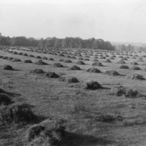 Twenty acres [...] being thrashed, 200 acres on this farm, October 1, 1931