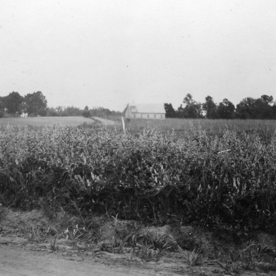 """Excellent field of oats and vetch for hay which was very thick and waist high making at least two tons of very fine hay per acre,"" July 19, 1920"