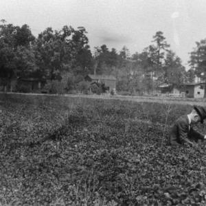Crimson clover demonstration, Bowden, North Carolina, Duplin County, April 23, 1925
