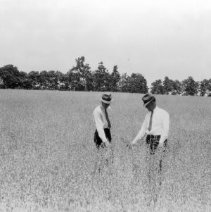County agent J. W. Cameron of Anson County and other inspecting oats field