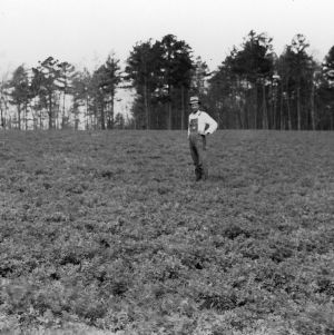 Alfalfa, sown latter part of September 1934