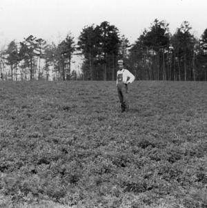 Alfalfa, sown latter part of September 1934