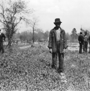 African-American man standing in a field of Austrian winter peas, Windsor, North Carolina, April 4, 1939