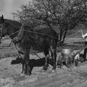 I. O. Schaub plowing a field with a mule