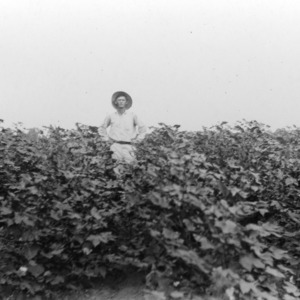 Frank S. Woodds in a field of cotton at Van Moore Place, Raleigh, North Carolina, June 1918