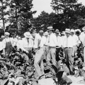 Studying tobacco in the field at a special Tobacco Day Meeting at the Tobacco Experimental Station
