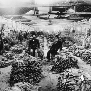 Group of men in a tobacco warehouse, Greenville, N.C.