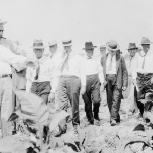 Group of men walking through a tobacco field