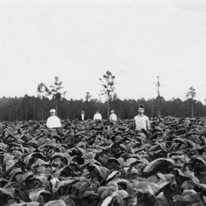 Men standing in an Oxford experimental farm plot