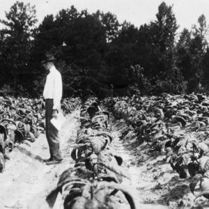 Man standing in an Oxford experimental farm plot