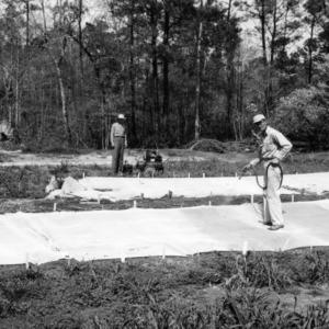 Spraying plants at the Border Belt station, Whiteville, North Carolina
