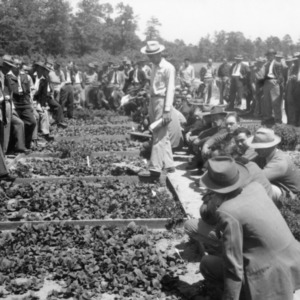 Group of men examining tobacco beds