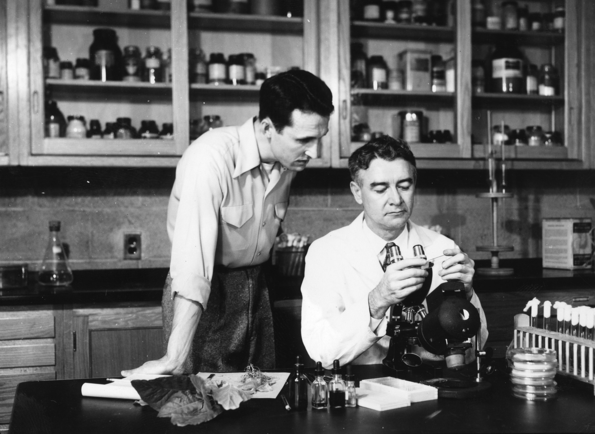 Two unidentified men examining a diseased tobacco plant in a tobacco plant disease clinic