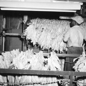 Tobacco market