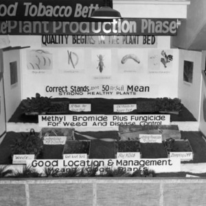 """Making good tobacco better"" display showing the plant production phase"