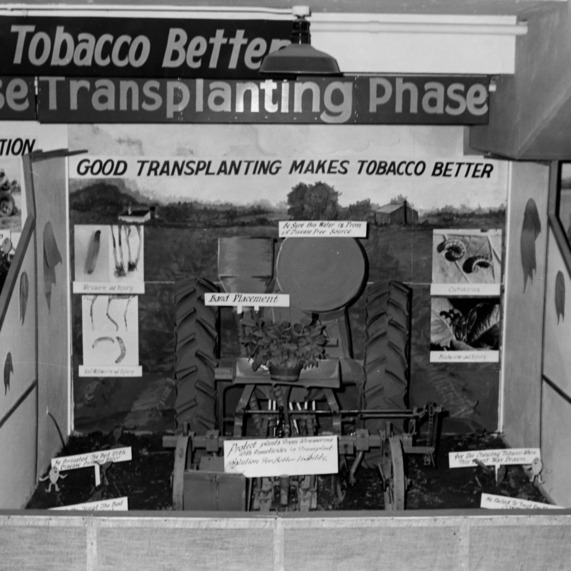 """Making good tobacco better"" display showing the transplanting phase"