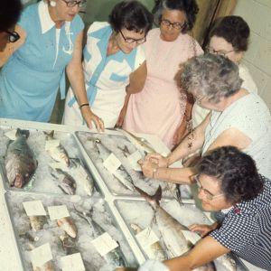 Women looking at fish from Carteret County, North Carolina