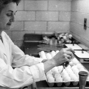 Woman working in a lab with eggs