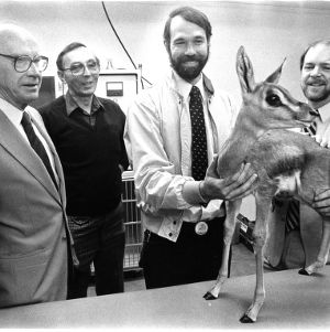 Examining a Grant's Gazelle at the N.C. Zoo