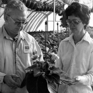 Agricultural Extension Service member Charles Earnest and other in greenhouse