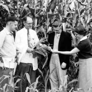 Agronomists in cornfield