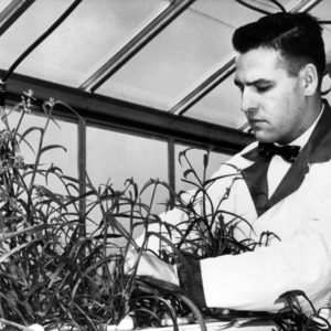 Plant study in greenhouse