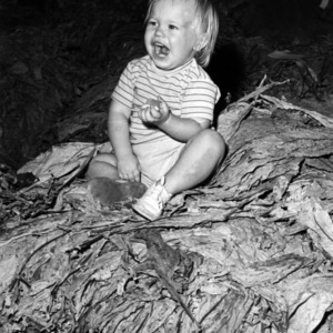 Small child on top of tobacco pile