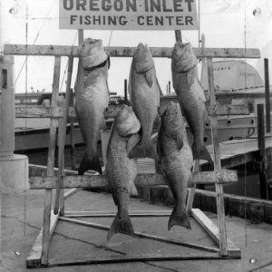 Caught fish on display
