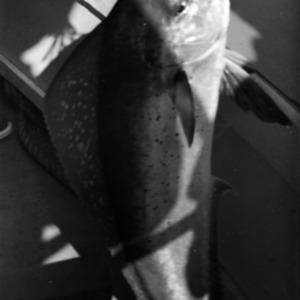 Fish caught on trip