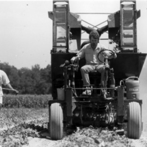 Men operating cucumber harvester in field