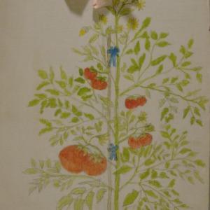 1915 girls club, tomato club booklet by Geringer, Elsie