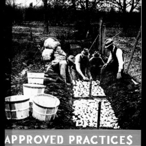 Approved Practices for Growing Sweet Potatoes (Extension Circular No. 250)