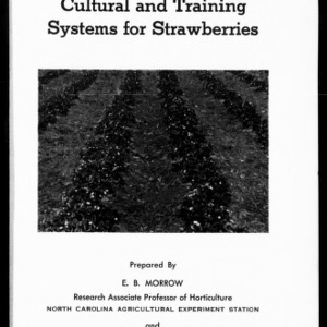 Cultural and Training Systems for Strawberries (Extension Circular No. 336B)