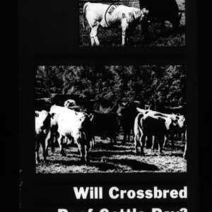 Will Crossbred Beef Cattle Pay? (Circular No. 583)