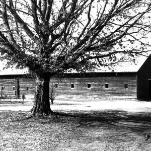 View, Tanglewood Farm, Johnston County, North Carolina