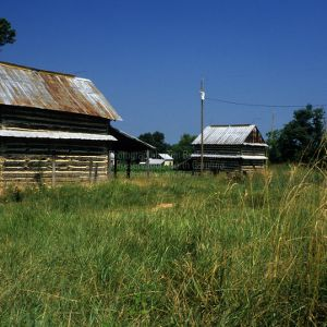 View, Tobacco Barns, Caswell County, North Carolina