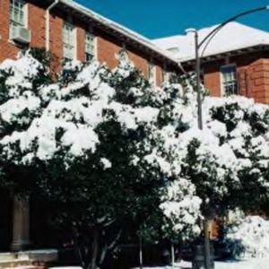 Nineteen Eleven Building after January 2002 Snow