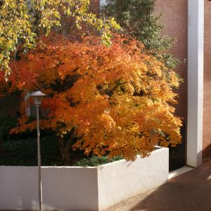 Autumn tree at Talley Student Center