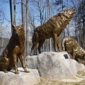 Wolves at Park Alumni Center