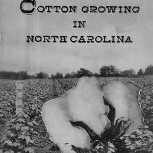 Cotton growing in North Carolina (Extension Circular No. 258)