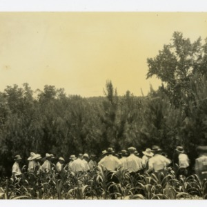 Farmers inspect loblolly pines, Stanly County, North Carolina :: Photographs