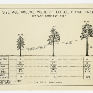 """Size-Age-Volume-Value of Loblolly Pine Tree"" Chart :: Photographs"