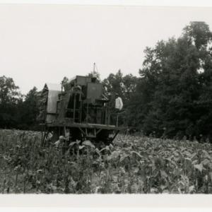 Harvesting machine at Avoca Farm