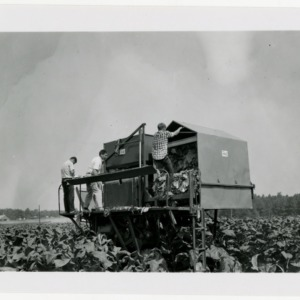 Harvesting at Graham Howard's farm