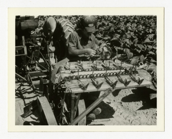 """Development of a Transplanter with Multiple Loading Stations,"" 1977-1978"